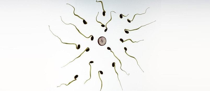 sperm in precum